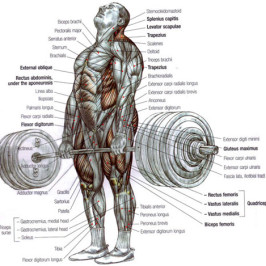Correct deadlifting technique