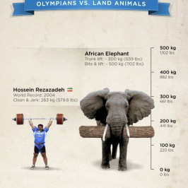 Lifting: Man vs Elephant